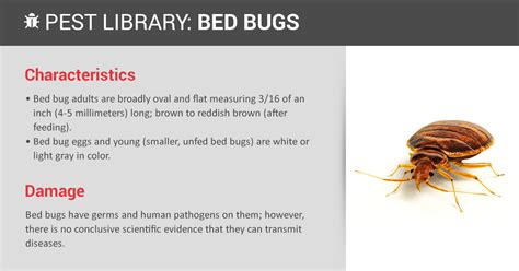 exterminators for bed bugs bed bug prevention indentification copesan pest library