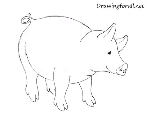 how to a pig how to draw a pig for drawingforall net