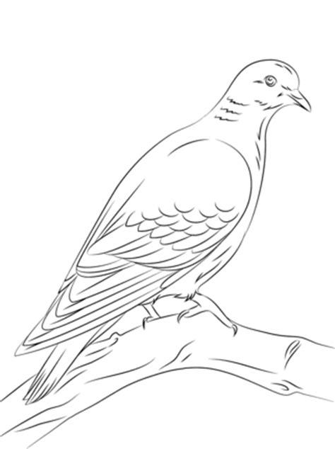 Dibujos de aves para imprimir y colorear | Colorear imágenes