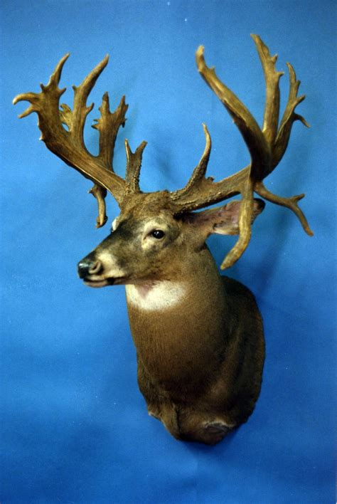 South Records Francis Fink South Dakota Non Typical Firearms Whitetail Deer Record