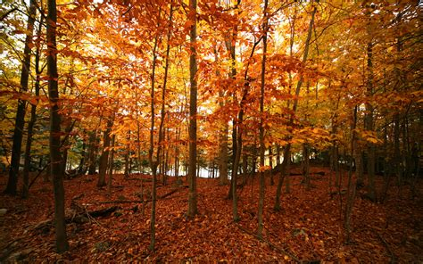 why fall is the best season the top 10 reasons why fall is the best season
