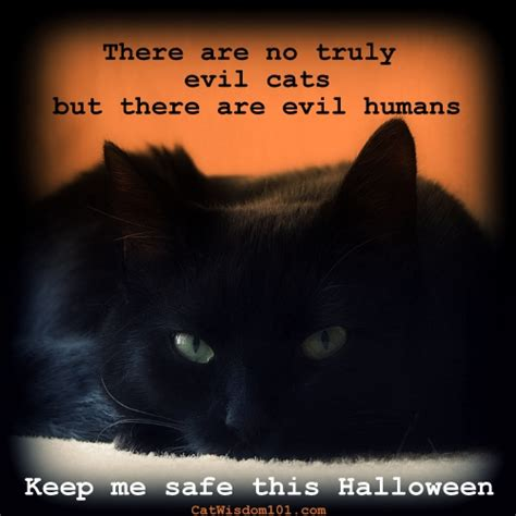 Cat Keeps On by Quotes About Black Cats Quotesgram