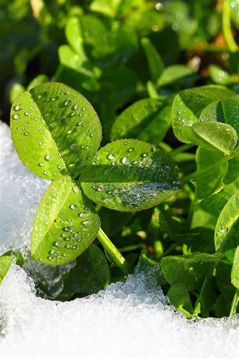 spring start the best spring gardens start with winter cover crops