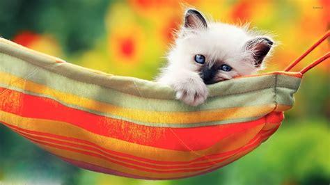 Kitten In Hammock: Cats friends funny cat hammocks baby