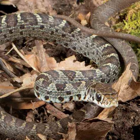 How To Avoid Snakes In Backyard 28 Images