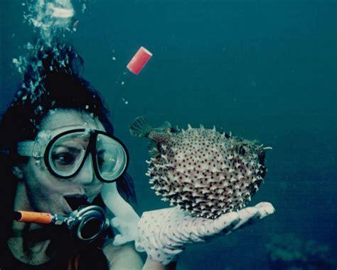 pro dive pro dive shop must see sarasota