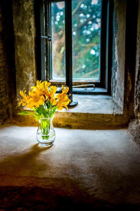 flower vase window  stock photo negativespace