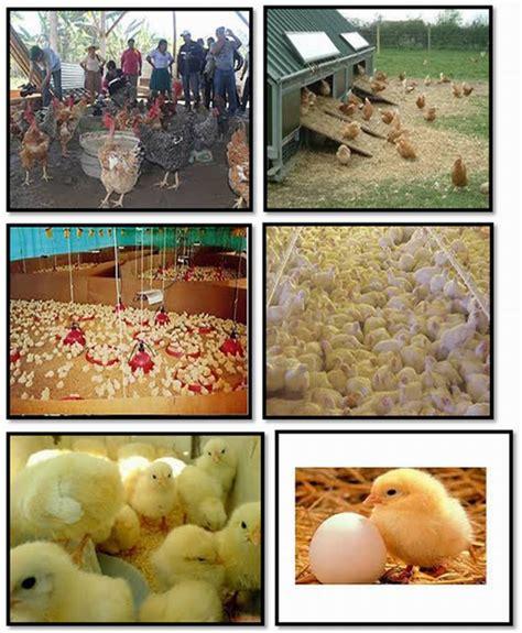 cadenas productivas sustentables regionales proyecto de manejo y cuidados de una granja de pollos