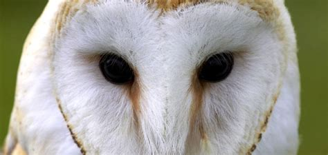 how to attract owls to your backyard attracting owls to your garden gardenshop