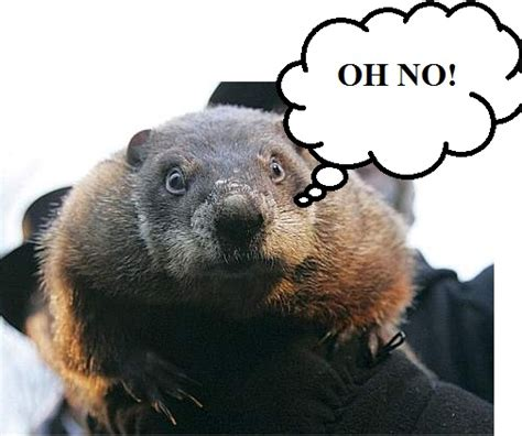 groundhog day phil how accurate is punxsutawney phil earth earthsky