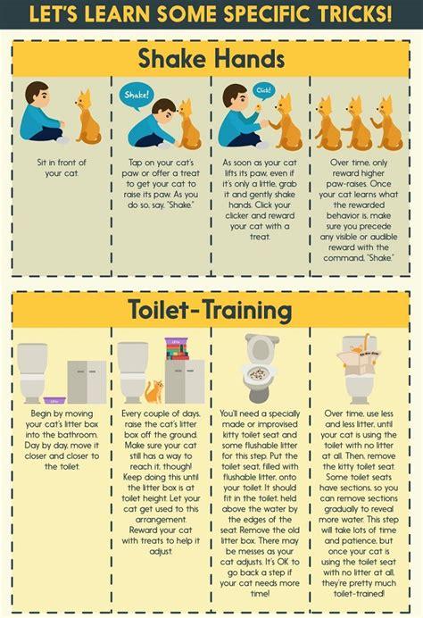 how to my to do tricks infographic how to teach your cat to do tricks designtaxi