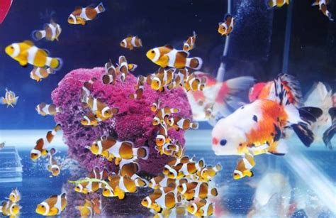 Berkualitas Tanaman Aquascape Water Air Laut Air Tawar Satu Akuarium Bebeja