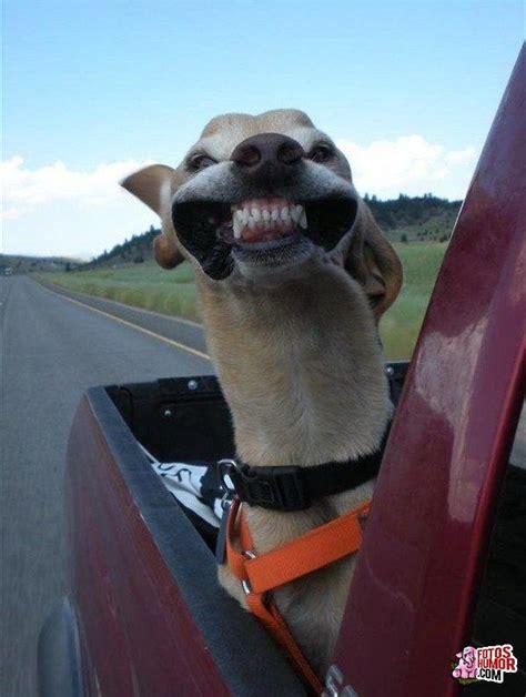 imagenes comicas de animales frases chistosas groseras and post fotos con memes
