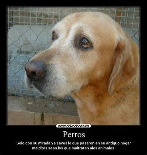 imagenes tristes de amor con animales perros desmotivaciones