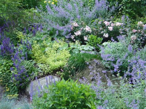 Steilen Hang Bepflanzen by Steep Slope Catmint Salvia And Smantle