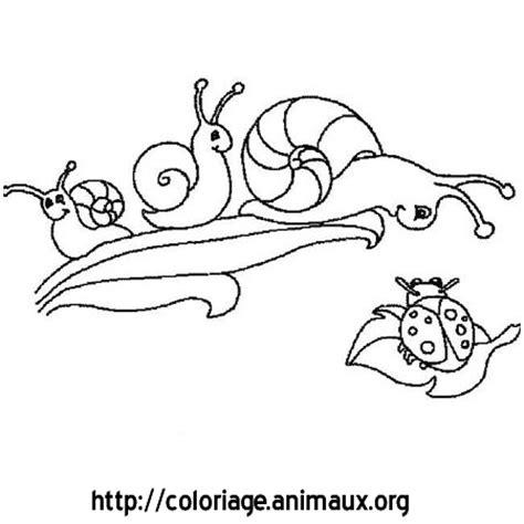94 Dessins De Coloriage Papillon Hugo L Escargot 224 Imprimer Coloriage Colorier L