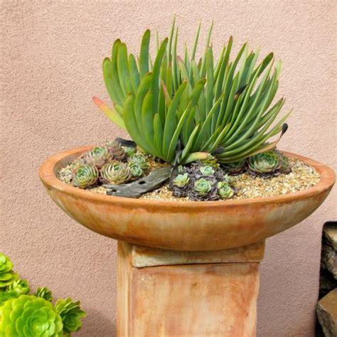 Indoor Rock Garden - 70 indoor and outdoor succulent garden ideas shelterness