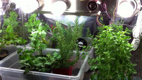 indoor garden tips growing herbs indoors  containers