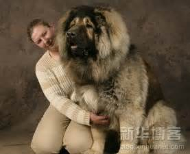 Large dogs of the planet 187 dog