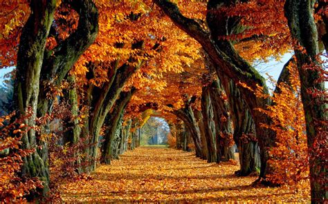 fall autumn autumn desktop wallpaper 2014 picture gallery