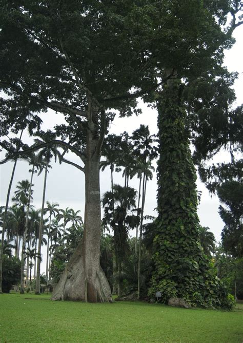 Aburi Botanical Garden File Aburi Botanical Gardens 3 Jpg
