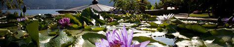 isola madre giardino botanico giardini isola madre