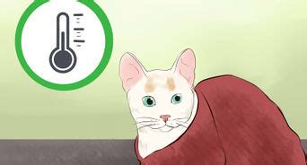 how to make a cat comfortable when dying how to comfort a dying cat 13 steps with pictures wikihow