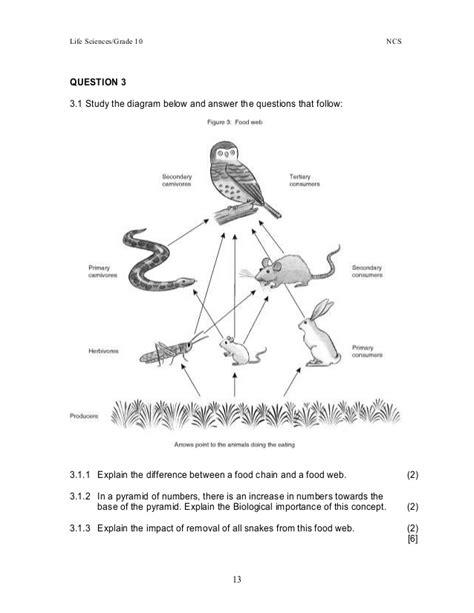food chain worksheet pdf food chain worksheet pdf the best worksheets image