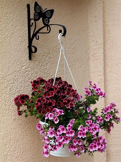 Tanaman Bunga Gantung 15 jenis macam aneka tanaman hias gantung dan daun 2017