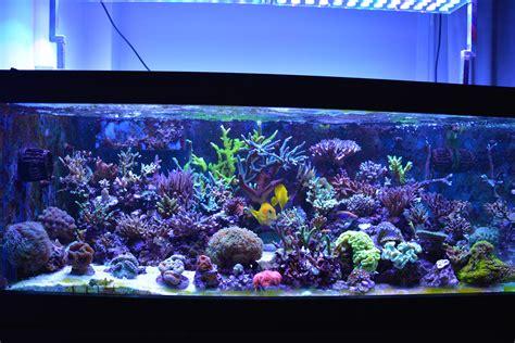 Lu Led Aquarium Laut reef aquarium atlantik v4 led lighting orphek