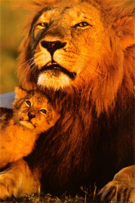 imagenes de leones con sus cachorros imagenes de africa taringa