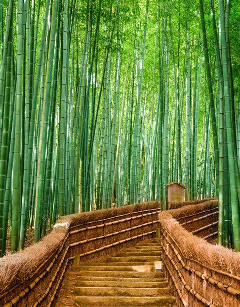 bamboo forest wall mural bamboo forest wall mural 6043