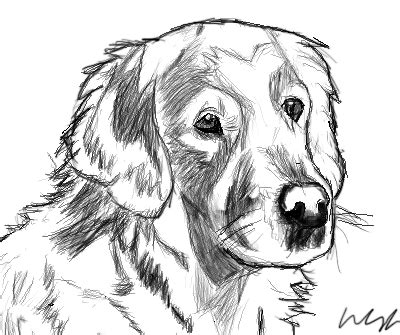 golden retriever sketch golden retriever sketch by dattonekid on deviantart
