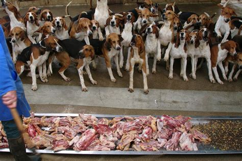 What To Eat When You Are In Waiting Or What Everywoman Should About Pregnancy And Diet Part 3 by Waiting To Eat Amazing Discipline Dogs At Cheve