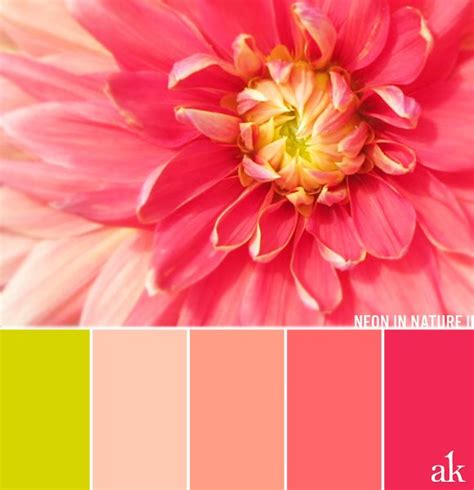 color combinations with pink best 25 coral color palettes ideas only on
