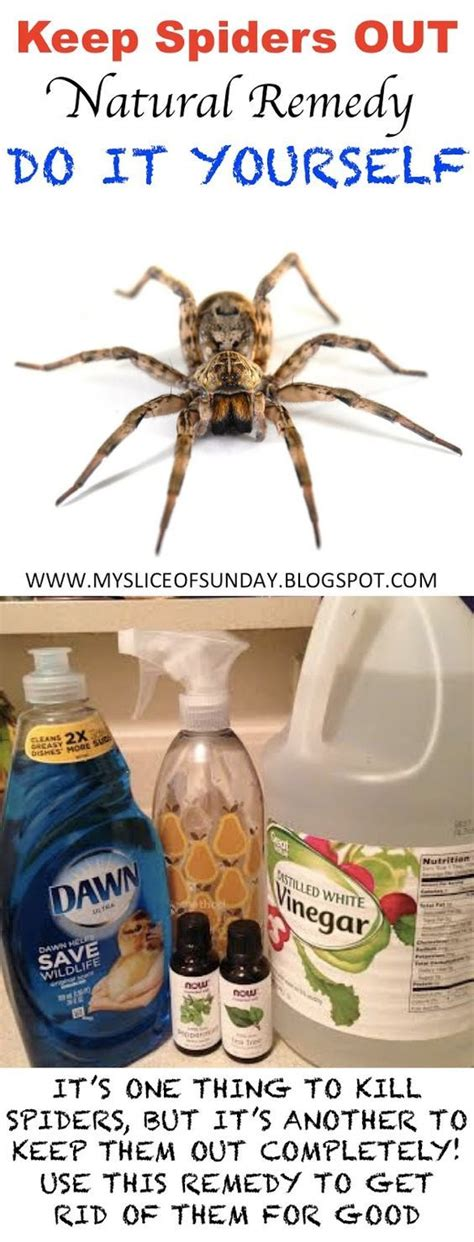 how to keep spiders out of your bed 1000 ideas about spider remedies on pinterest roach