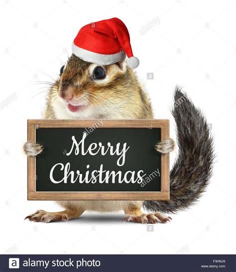 funny santa claus squirrel hold blackboard  merry christmas  stock photo royalty