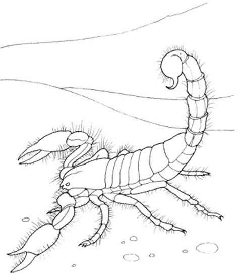 Scorpion Coloring Page 8 Printable Scorpion Coloring Sheet by Scorpion Coloring Page