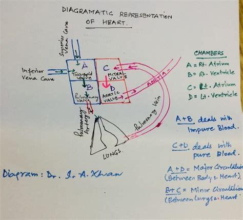 pembuatan yakult pdf perch circulatory system diagram images how to guide and