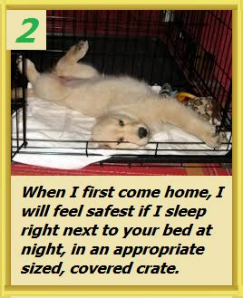 should puppy sleep in crate potty your puppy valor goldens