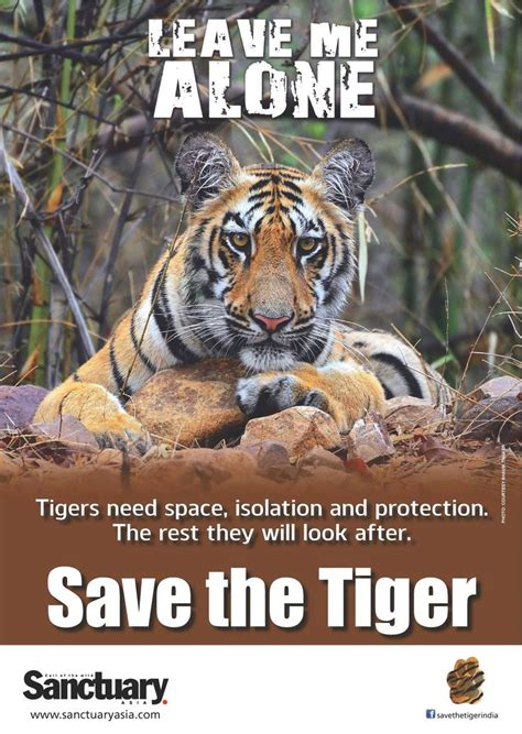 Save Tiger Essay In by Essay On Save Tiger Save Earth