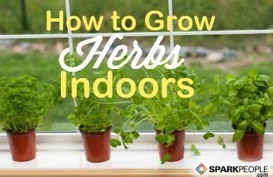 growing herbs in the garden valley news how to grow an herb garden inside roselawnlutheran