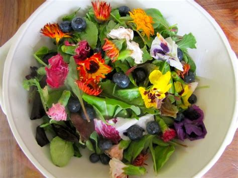 flower food recipe recipe edible flower salad the insanity of health