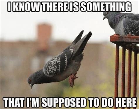 Funny Bird Memes - meme early bird chronicles