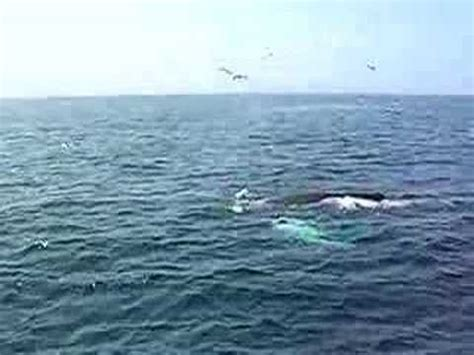 whale attacks boat whale attacks watching boat youtube