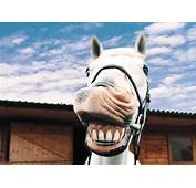 Funny Horse Pictures  The Animal Life