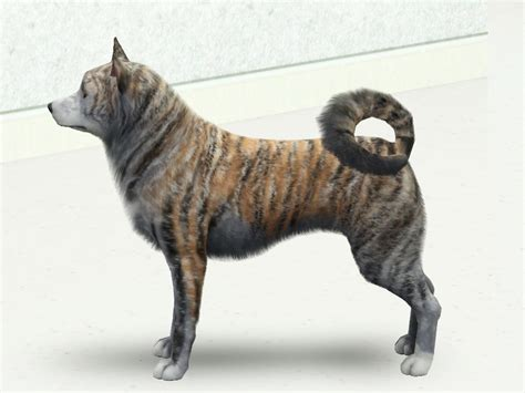 akita colors my sims 3 new akita inu breed with 5 colours by