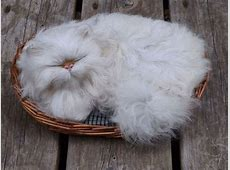 20+ Of The Fluffiest Cats In The World   Bored Panda Fluffiest Kittens In The World