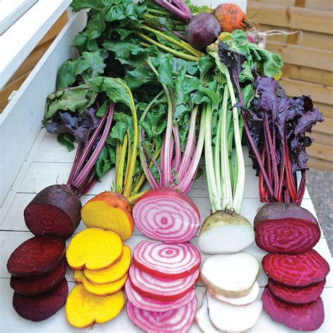 beet color rainbow mix beet seeds from park seed