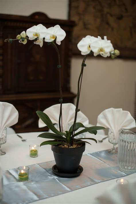 orchids wedding centerpieces best 25 potted orchid centerpiece ideas on white orchid centerpiece orchid